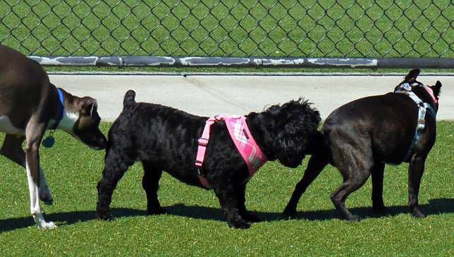 Why do dogs like to smell other dog's butts? – TailsLife Blog